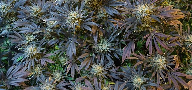 Fort Myers Beach Marijuana Clinic